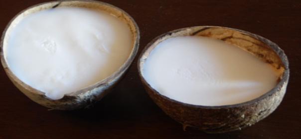 usi dell olio di cocco
